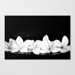 Singapore White Plumeria Flowers the Fragrance of Hawaii Canvas Print