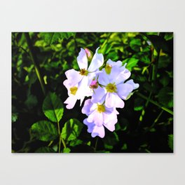 The Wild Rose In Living Color Canvas Print