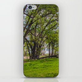 Cottonwoods at Lee's Farm iPhone Skin