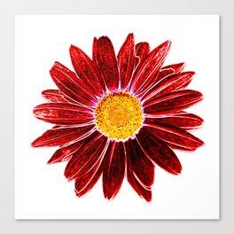 DAISY LOVE #2 Canvas Print
