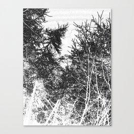 PINETREES Canvas Print