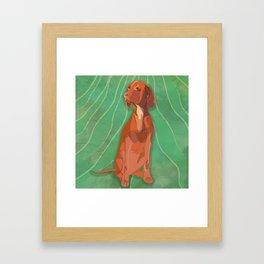 Hungarian Vizsla Framed Art Print