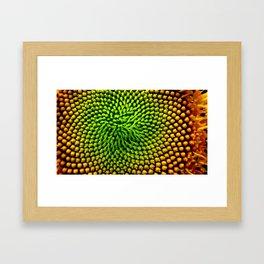 Sunflower Seeds Framed Art Print