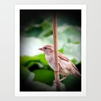 sparrow Art Prints featuring Sparrow by Angelandspot