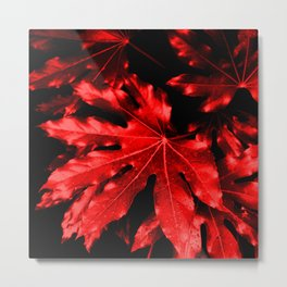 Festive Fatsia - Christmas Red Metal Print
