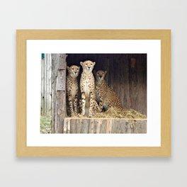Cheetah Girls Framed Art Print