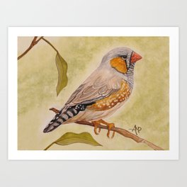 Zebra Finch Watercolor Art Print