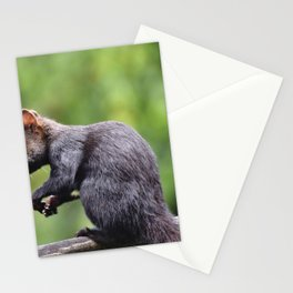 Squirrel Verifiable Kitten Rodent Stationery Cards