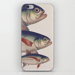 Fish Classic Designs 5 iPhone Skin