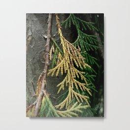 Cedar branch Metal Print