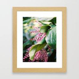 Tropical Rio Flower Framed Art Print