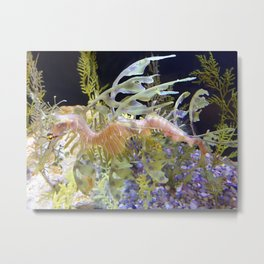 Leafy Sea Dragon at Birch Aquarium Metal Print