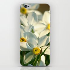 Cascade iPhone & iPod Skin