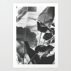 Black and White Banana Leaf Art Print