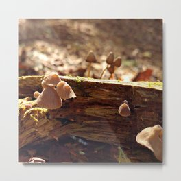 Sunlit Baby Mushrooms Metal Print