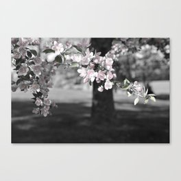 Crab Apple in Pink Canvas Print