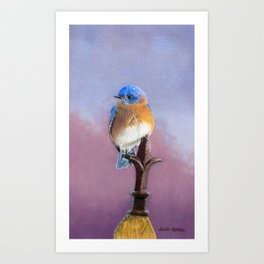 Backyard Bluebird- Cropped Art Print