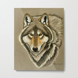 Gray Wolf Timber Wolf Portrait Metal Print