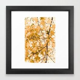Japanese Maple Tree Acer Palmatum Framed Art Print