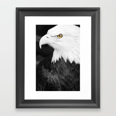 Bald Eagle with Yellow Eye Framed Art Print
