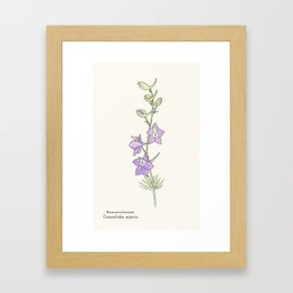 Ligne claire 1: Doubtful Knight's Spur (Consolida ajacis) Framed Art Print