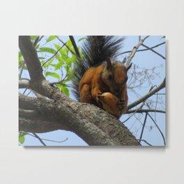 Variagated Squirrel Metal Print