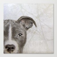 pitbull Canvas Prints featuring Pitbull by MiartDesignCreation