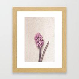 Pink Hyacinth Framed Art Print