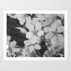 Places in Black & White: Plum Tree 12 Art Print