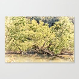 Memories of the river Canvas Print