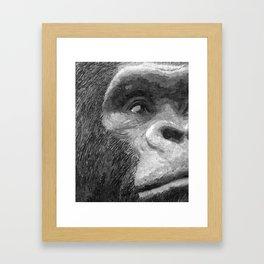 Curious gorilla Framed Art Print
