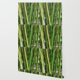 BAMBOO Wallpaper