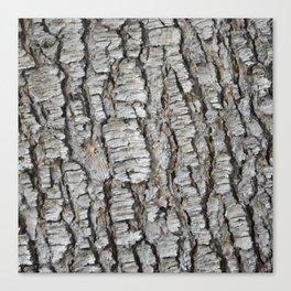 TEXTURES -- Spruce Bark Canvas Print