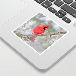 Winter's End Cardinal Sticker