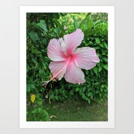 Vacation Flower Art Print