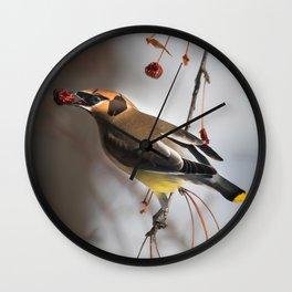 Cedar Waxwing on Branch Wall Clock