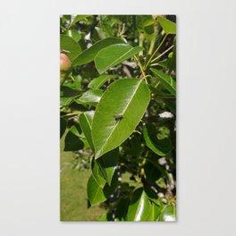Teeny Fly ... Big Leaf Canvas Print
