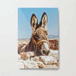 Donkey photo Metal Print