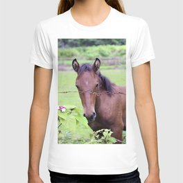 Tropical Island Horse Behind Barbed Wire Fence T-shirt