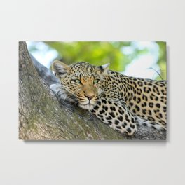 A Leopards Gaze 2 Metal Print