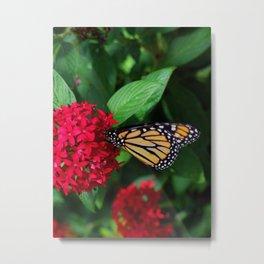 Musing Monarch Metal Print