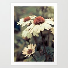 Soft white cone flower Art Print