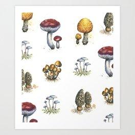 Mushroom Watercolor Pattern Art Print
