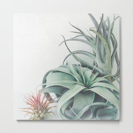 Air Plant Collection Metal Print
