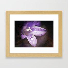 Little Bellflower---Campanula Framed Art Print