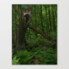 Interesting Tree Canvas Print
