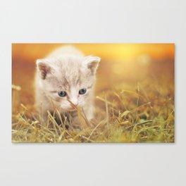 Blue-Eyed Kitten Canvas Print