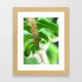*Fern Morning Framed Art Print