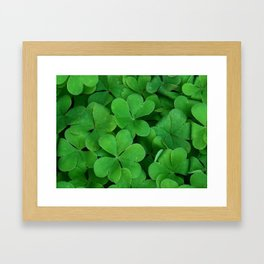 Lush Green Three Leaf Clovers Framed Art Print
