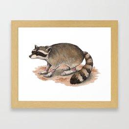 Snuggly Sock Raccoon Framed Art Print